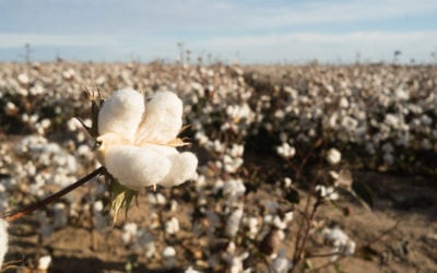 The Cotton Project
